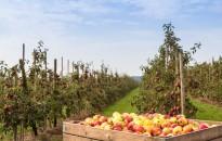 Gyümölcsültetvények bejelentése
