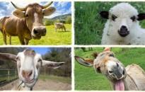 Lakossági felhívás állattartás bejelentéséről
