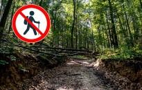 Tájékoztatás - Az Erdő Látogatásáról